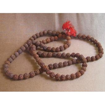 Prayer beads Rudrakhasha fruit / 2-Pack