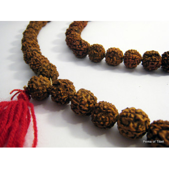 Prayer beads Mala from Rudrakhasha fruit / 2-Pack